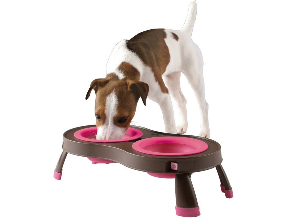 Collapsible Pet Feeder | Animals Zone