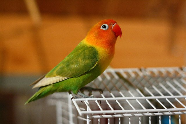 5 Tips on Choosing a Bird Cage | Animals Zone