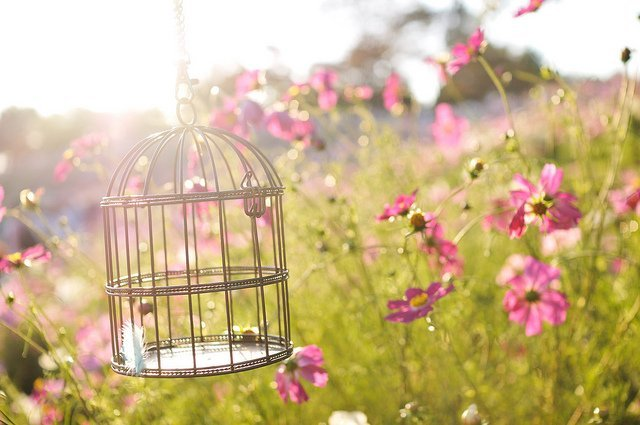 5 Tips on Selecting the Perfect Bird Cage | Animals Zone