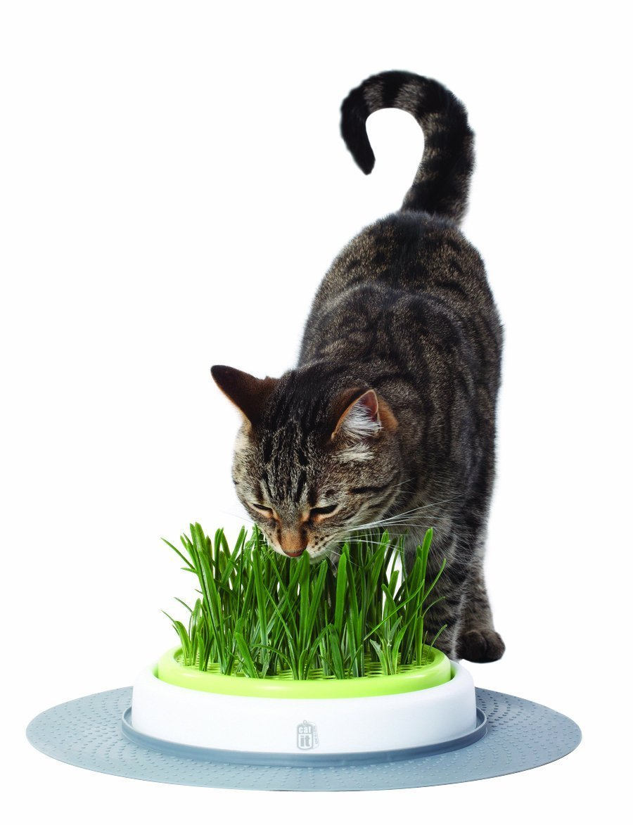 Grass Garden Kit | Animals Zone