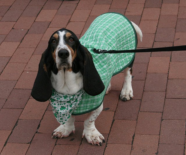 Proving again that everyone, and everything is Irish on Saint Patrick's Day. | Animals Zone