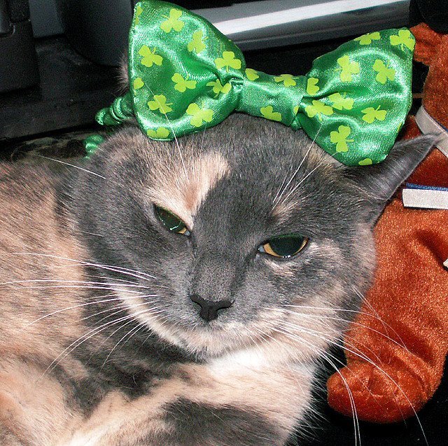 Green is SO Me! Happy St. Patrick's Day! | Animals Zone