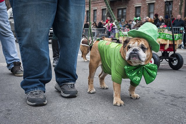 St. Pat's for All | Animals Zone