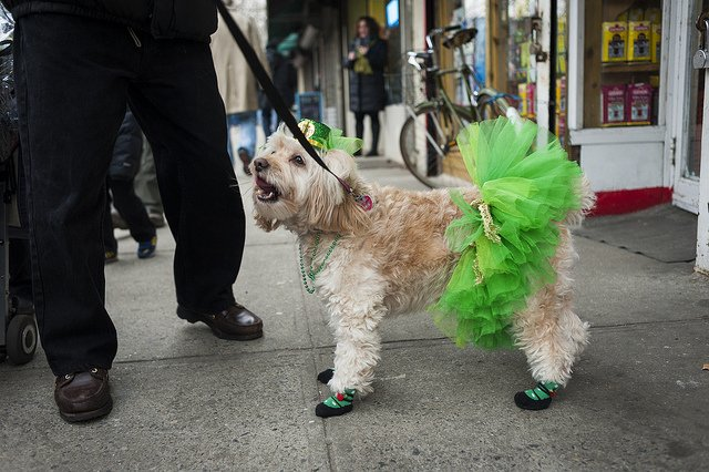 Pets get Festive for Saint Patrick's Day | Animals Zone