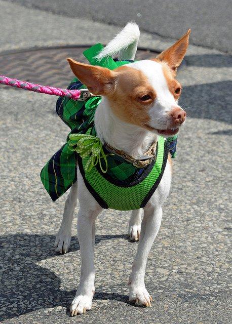 St Patricks Day Parade | Animals Zone