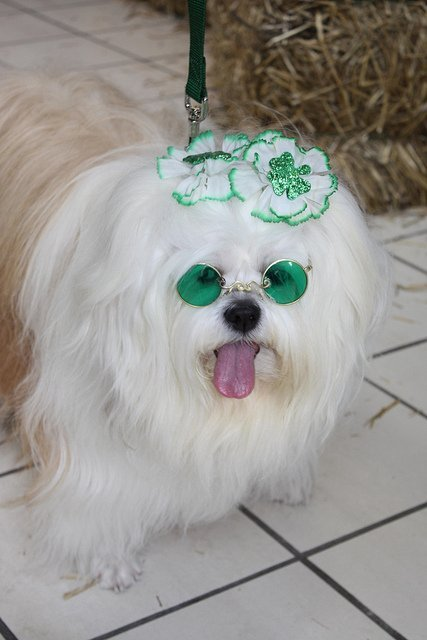 Ready for St. Patrick's Day | Animals Zone