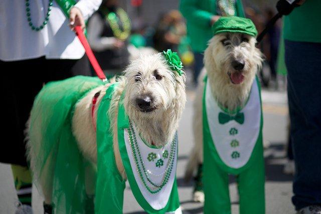 At St. Patrick's Day Parade, San Francisco | Animals Zone