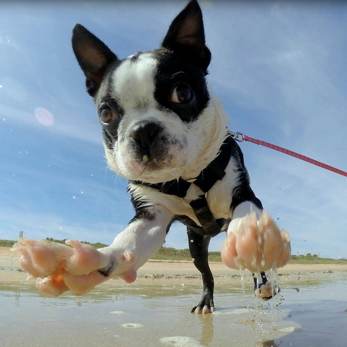 This is Nomzilla! And she loves the beach! | Animals Zone