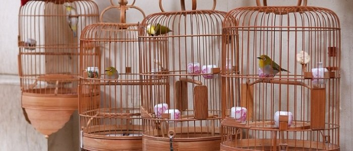 bird-cages-featured