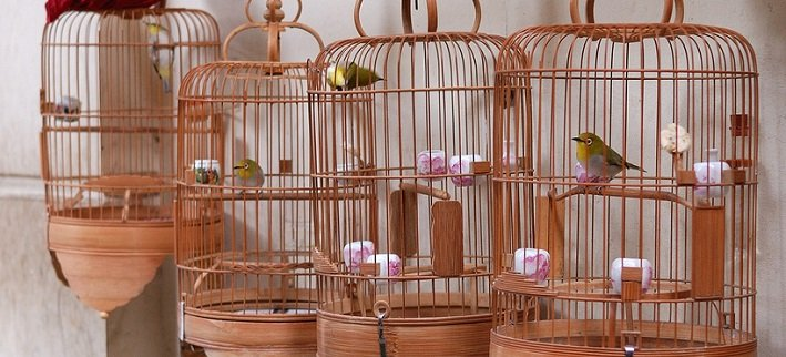 Bird Cages & Bird Cage Stands | Animals Zone