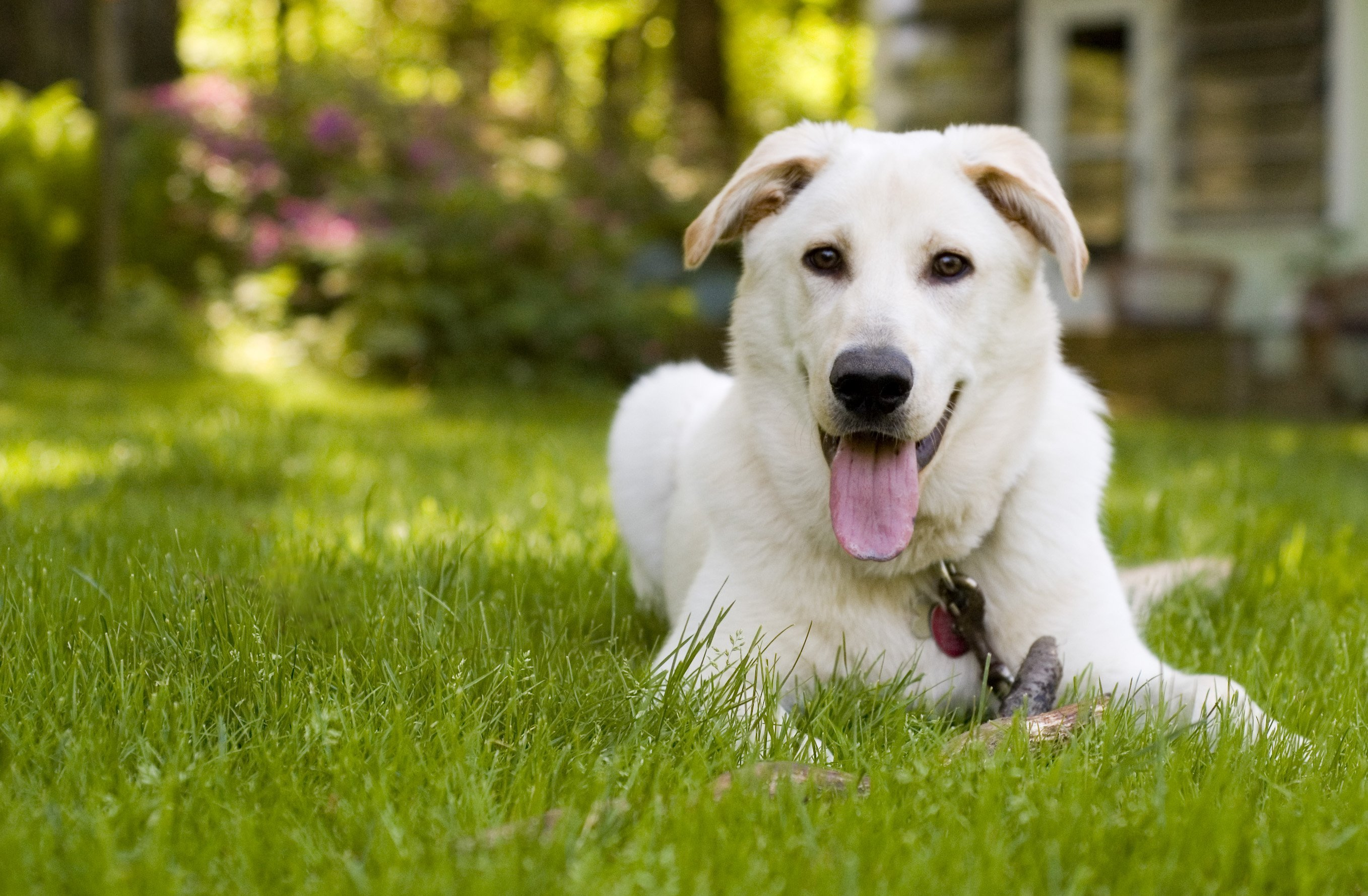 Summer is a wonderful time to spend outdoors with your dog! | Animals Zone