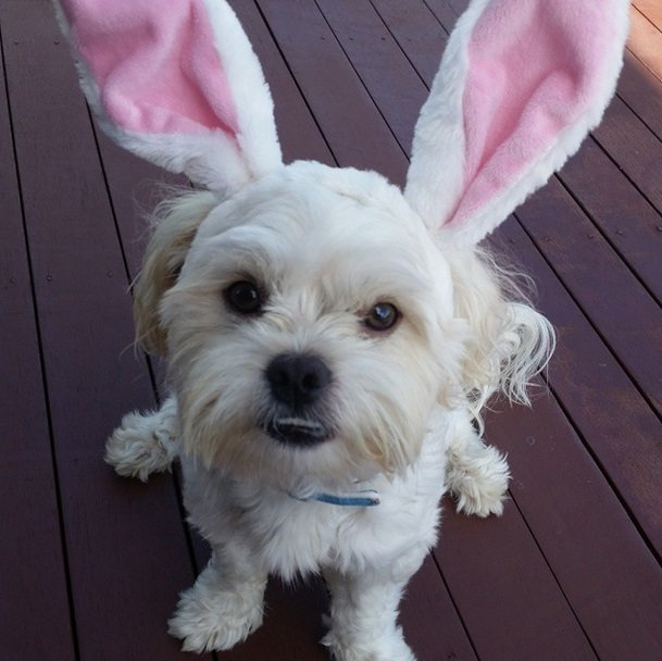 Adorable pets celebrate Easter on Instagram | Animals Zone