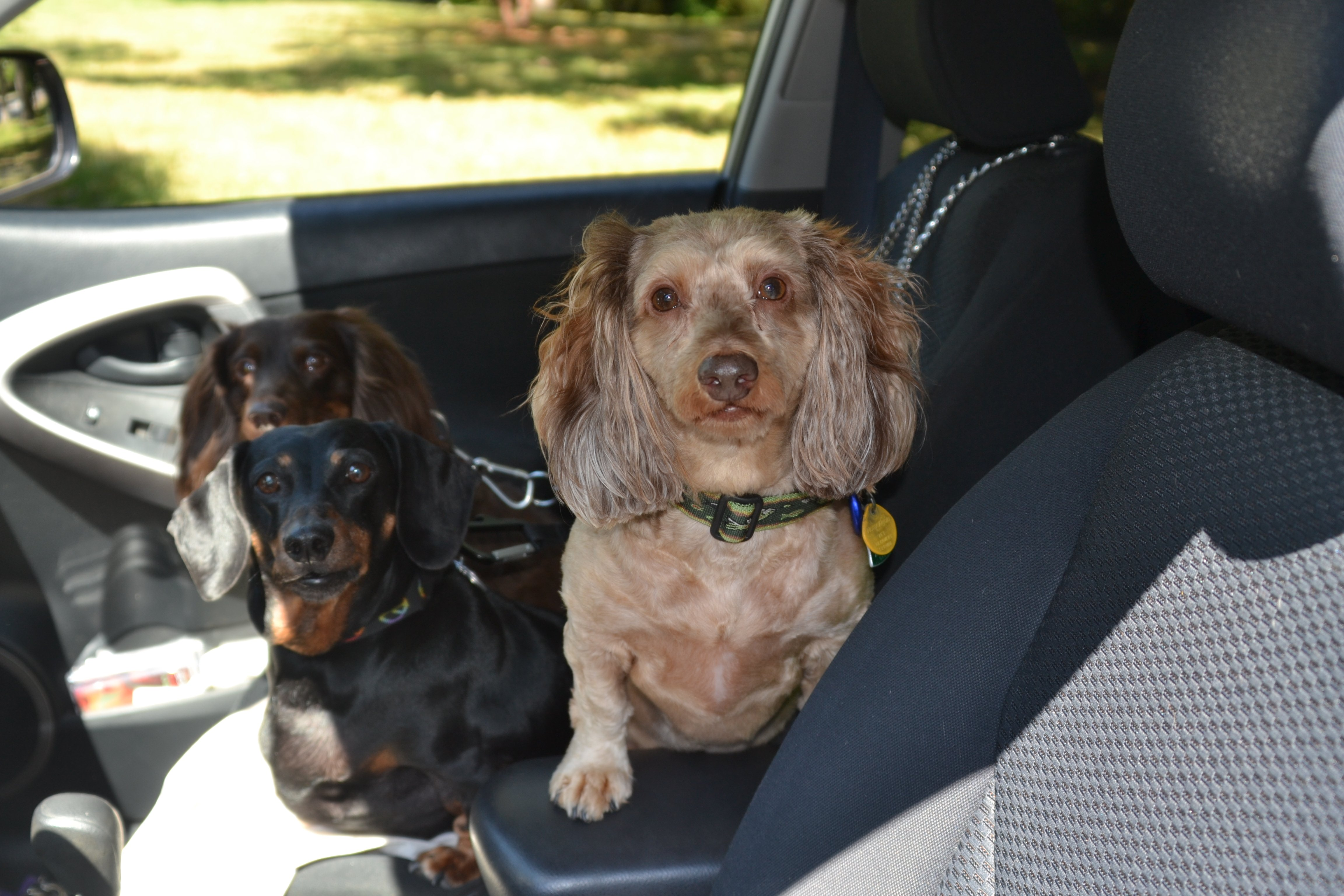 Road trip buddies! | Animals Zone