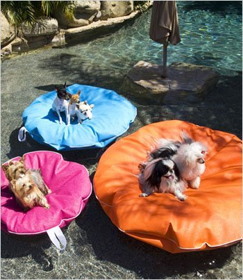pool-lounger