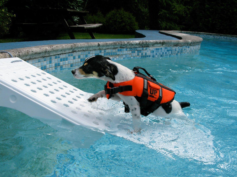 pool-skamper-ramp