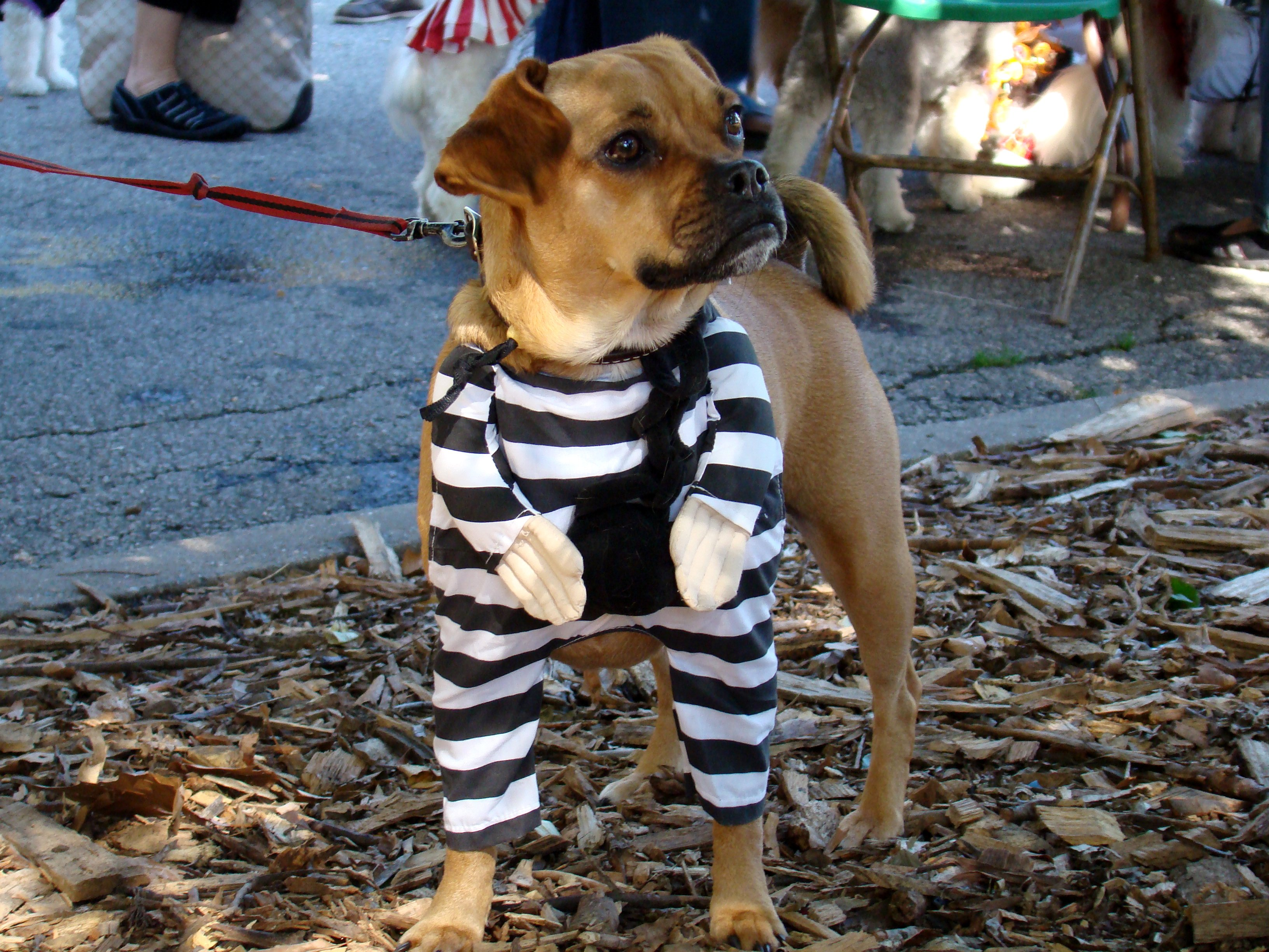 Prisoner Puggle | Animals Zone