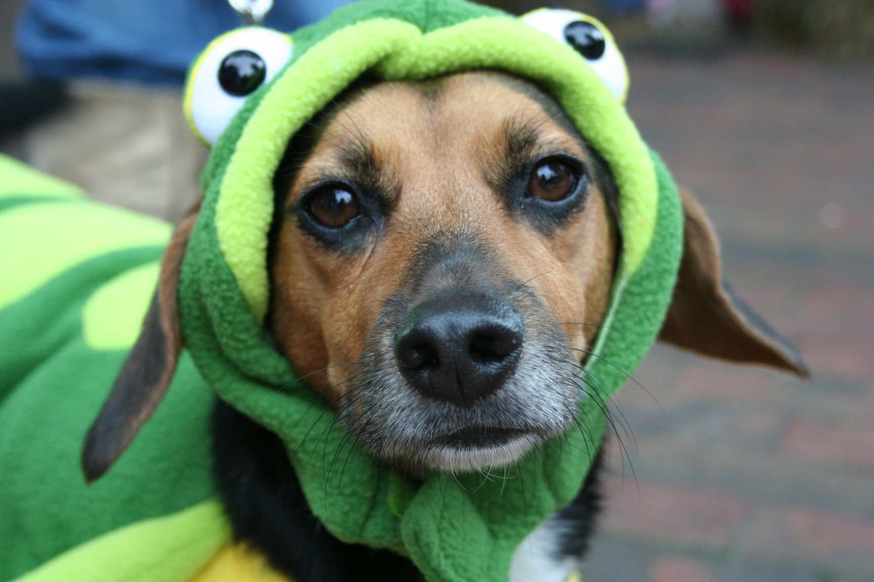 Cute Frog Dog | Animals Zone