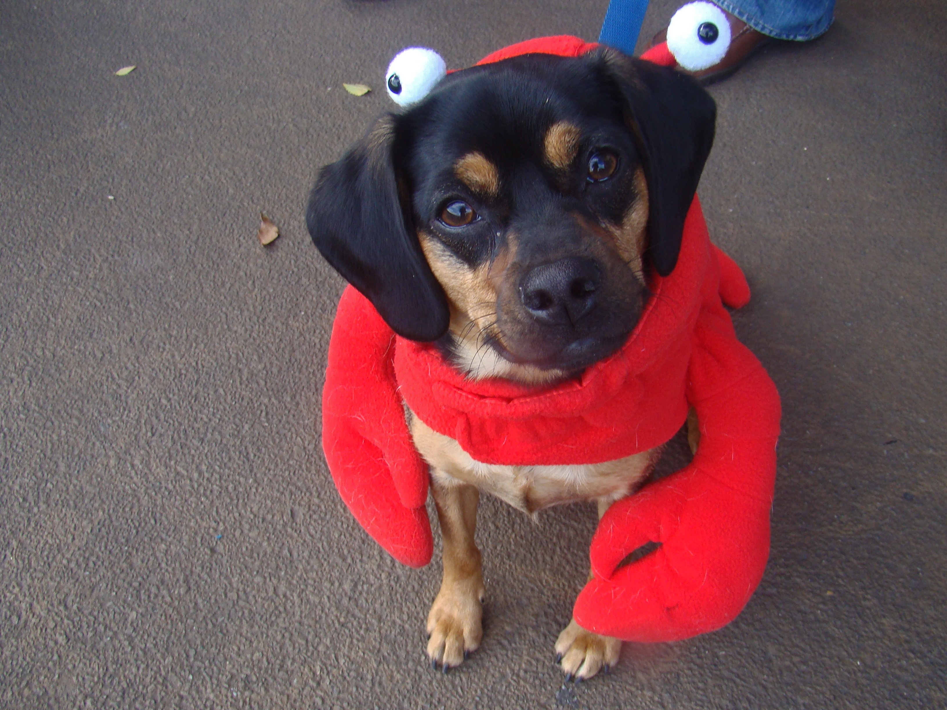 Lobster Dog | Animals Zone