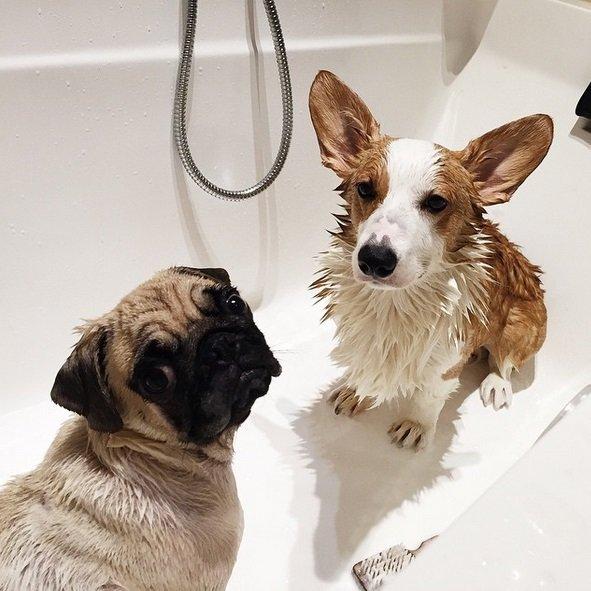 Bathing Cuties! | Animals Zone