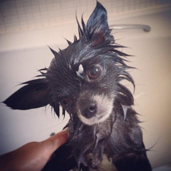 Bath time for Barrie | Animals Zone