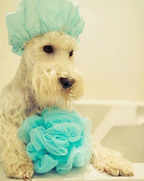 Sunday Bath | Animals Zone