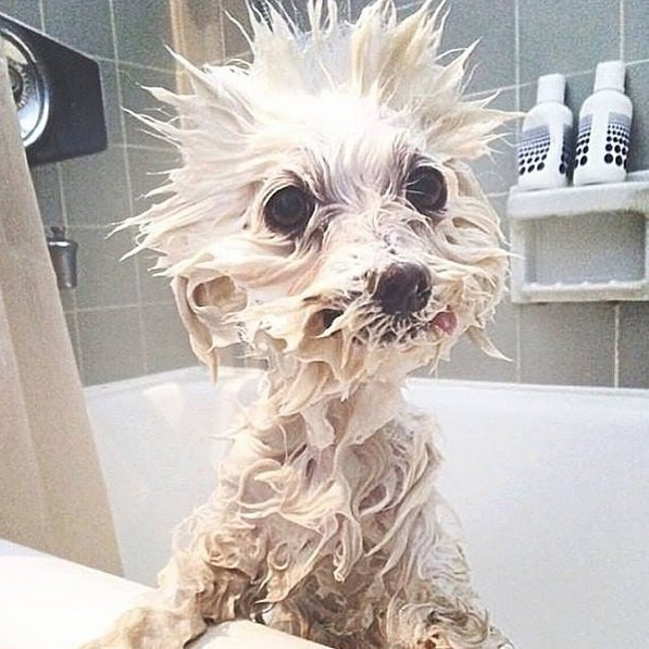 Hilarious Photos Capture Dog Emotions at Bath Time | Animals Zone