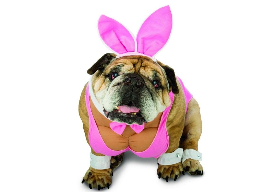 Rubies Costume Company Star Wars Bantha  sc 1 st  Animals Zone & 15 Funniest Dog Costume Ideas for Halloween | Animals Zone