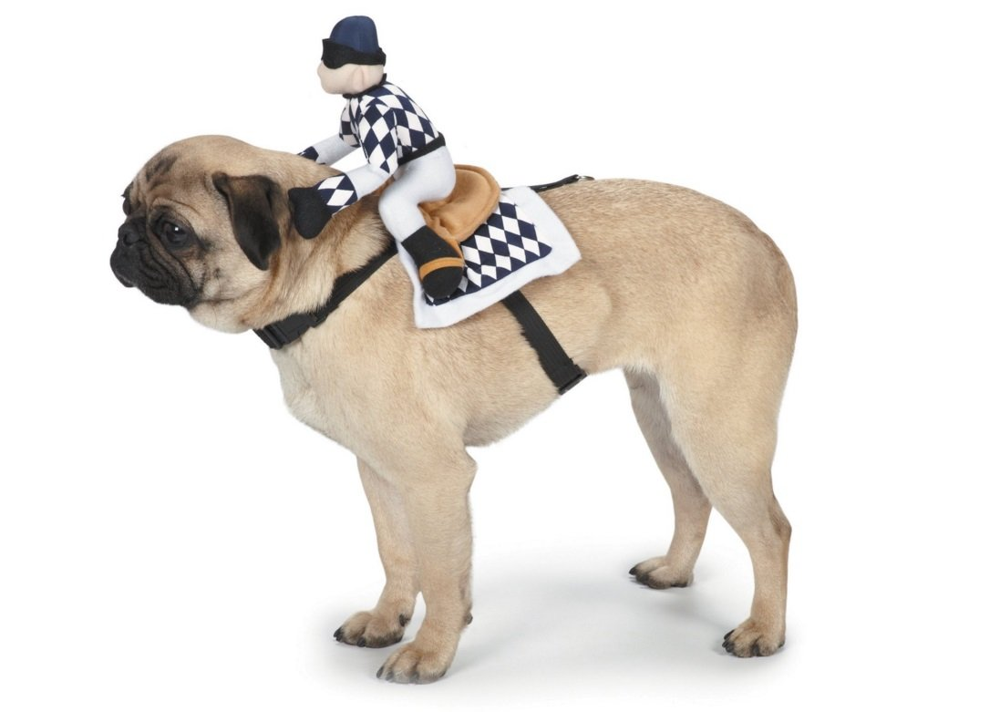 Jockey Halloween Costume For Dogs