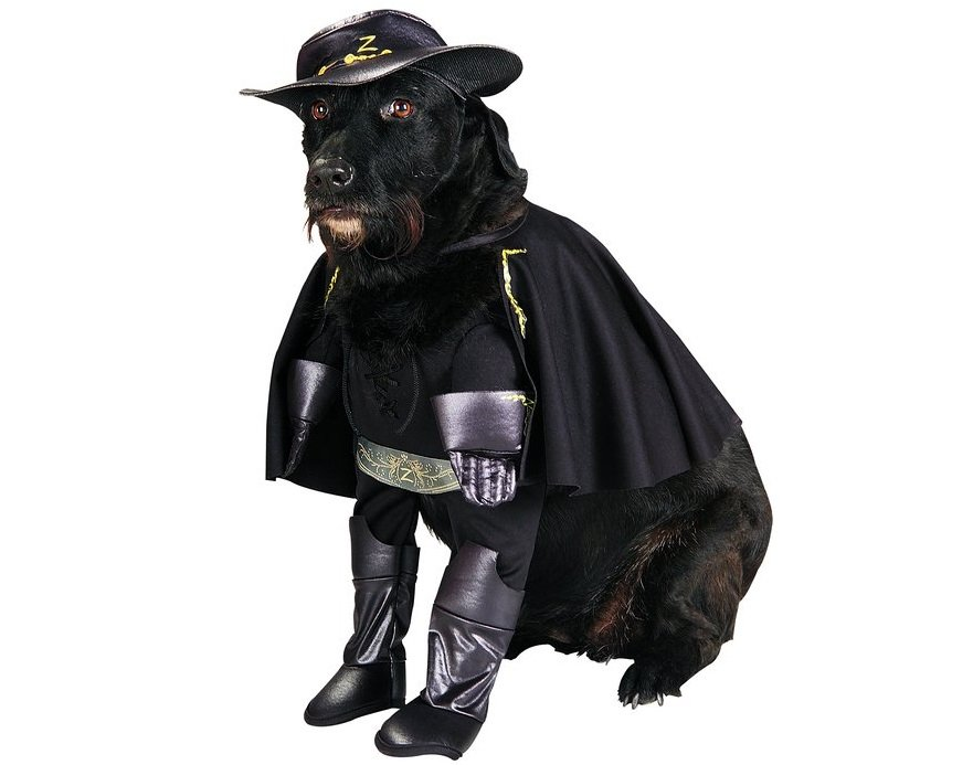 Zorro is all ready for Halloween | Animals Zone