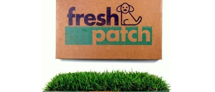 bf-fresh-patch