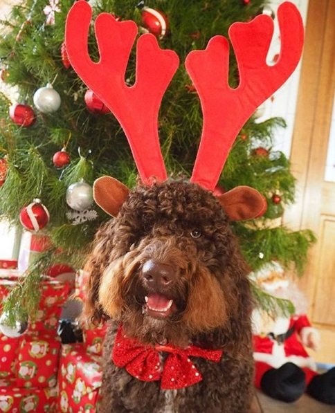 One of the cutest reindeers we've ever seen! | Animals Zone