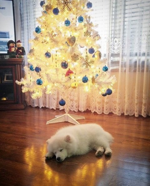 Putting up a Christmas tree is hard work! | Animals Zone