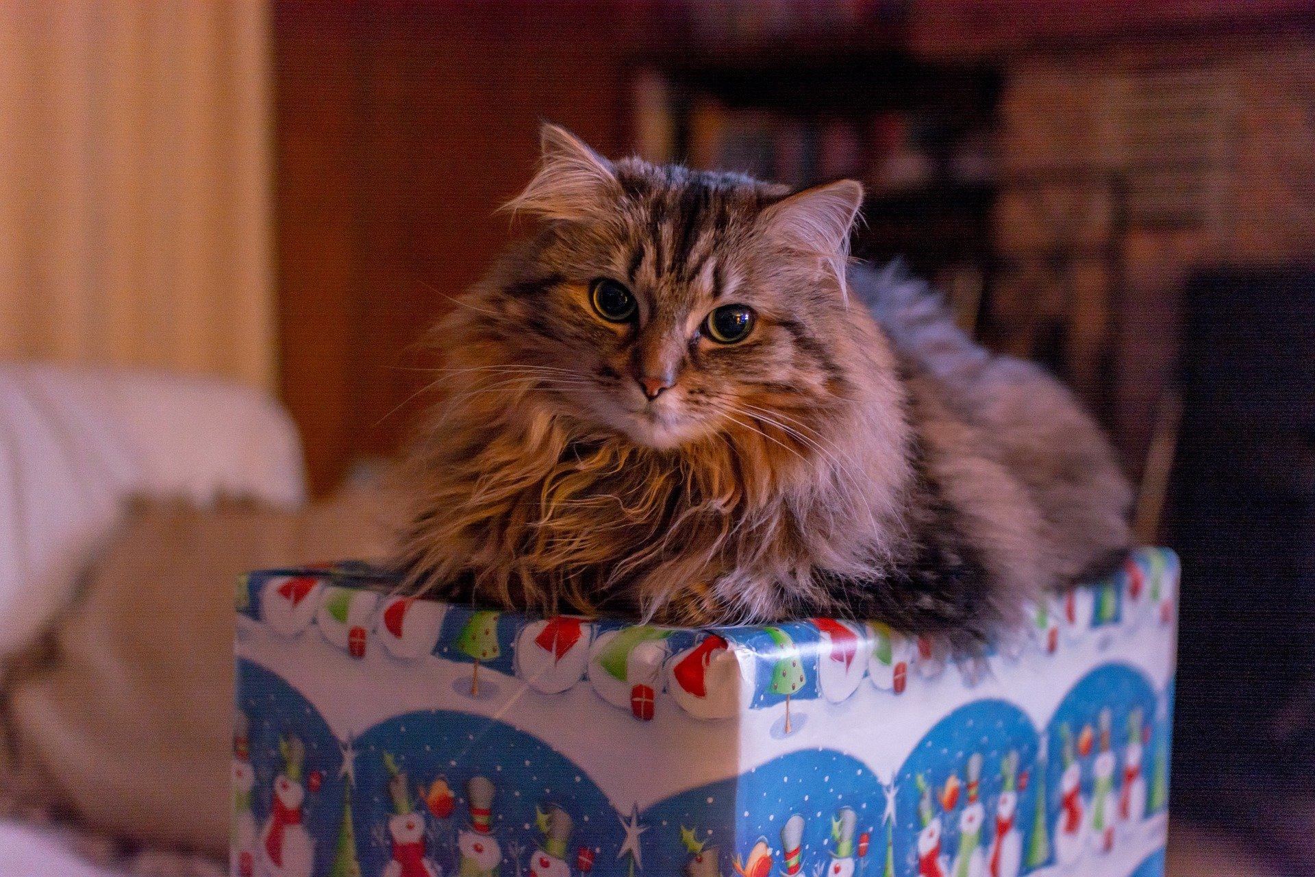 Why humans like to schedule their time? If you bought me a present, then let me open it now! | Animals Zone