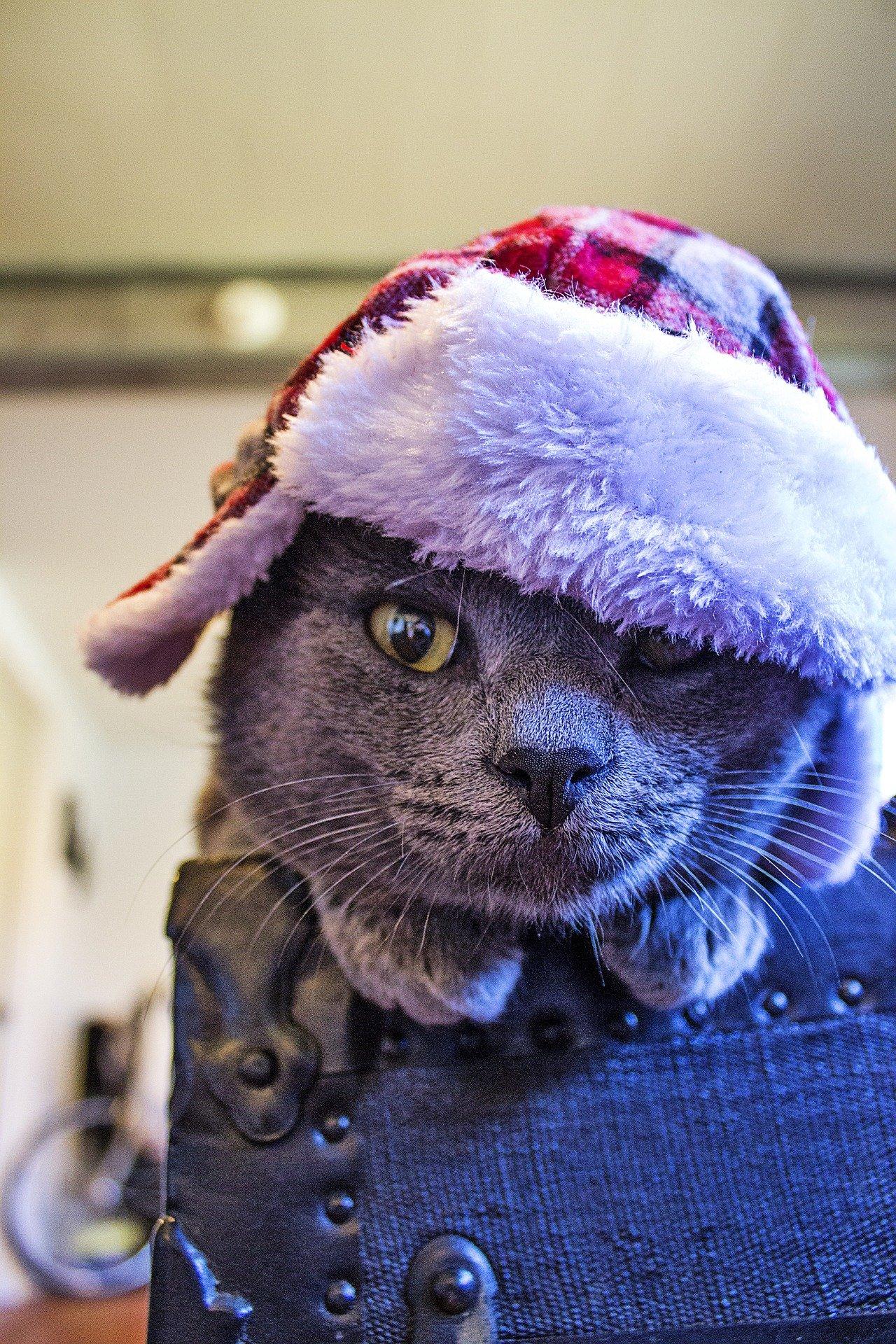 Merry Christmas friends! | Animals Zone