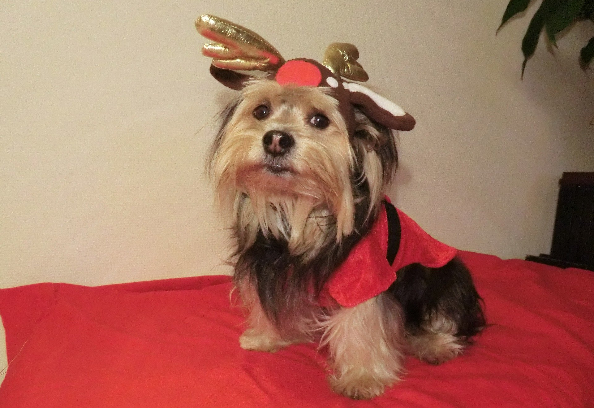 Christmas Pets 2015: Totally Ready to Celebrate | Animals Zone