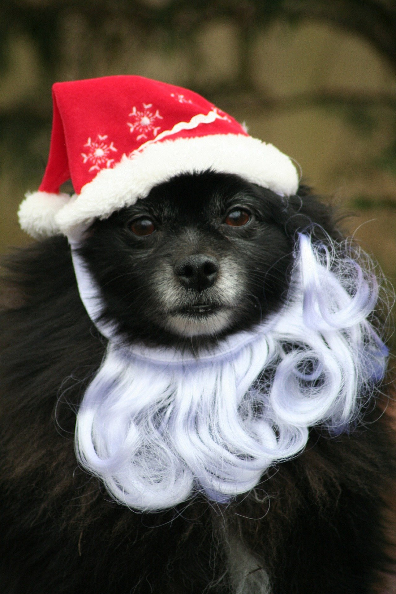 Merry Christmas! | Animals Zone