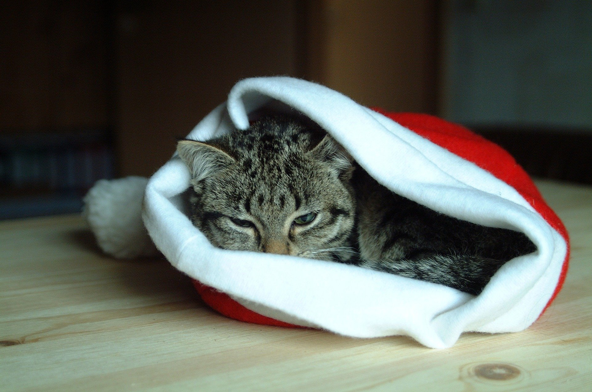 Meowy Christmas! | Animals Zone