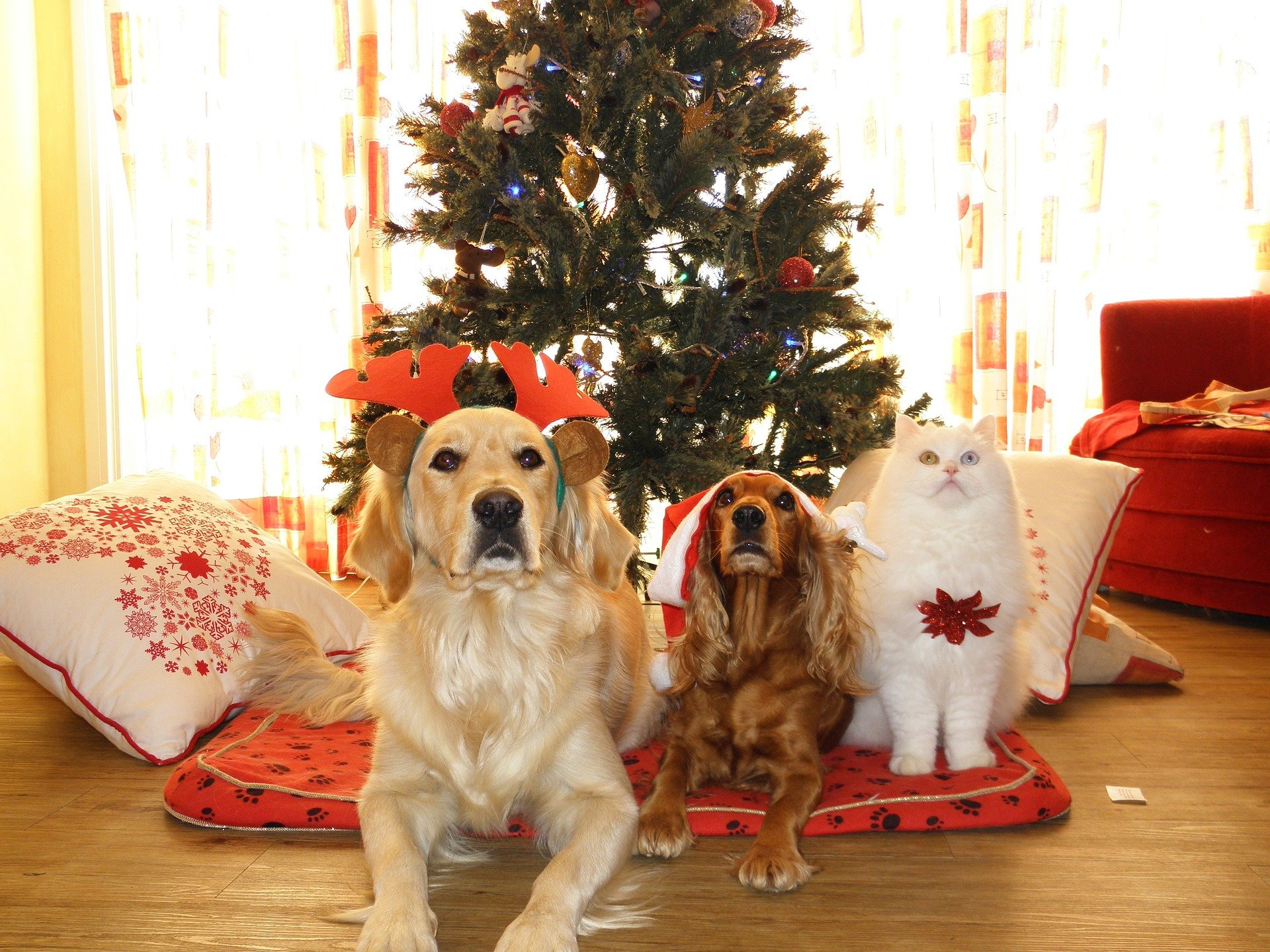 Holiday Gift Guide: Best Gifts for Dogs and Cats this Christmas | Animals Zone