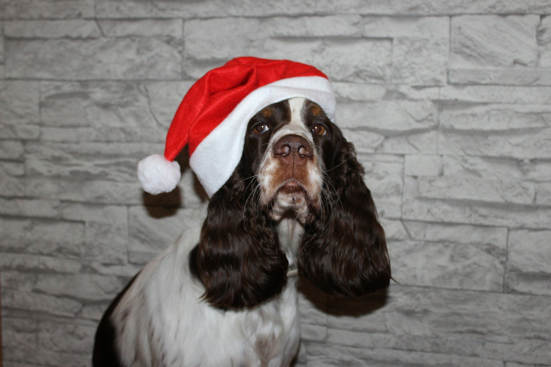 HO HO HO! Merry Christmas! | Animals Zone