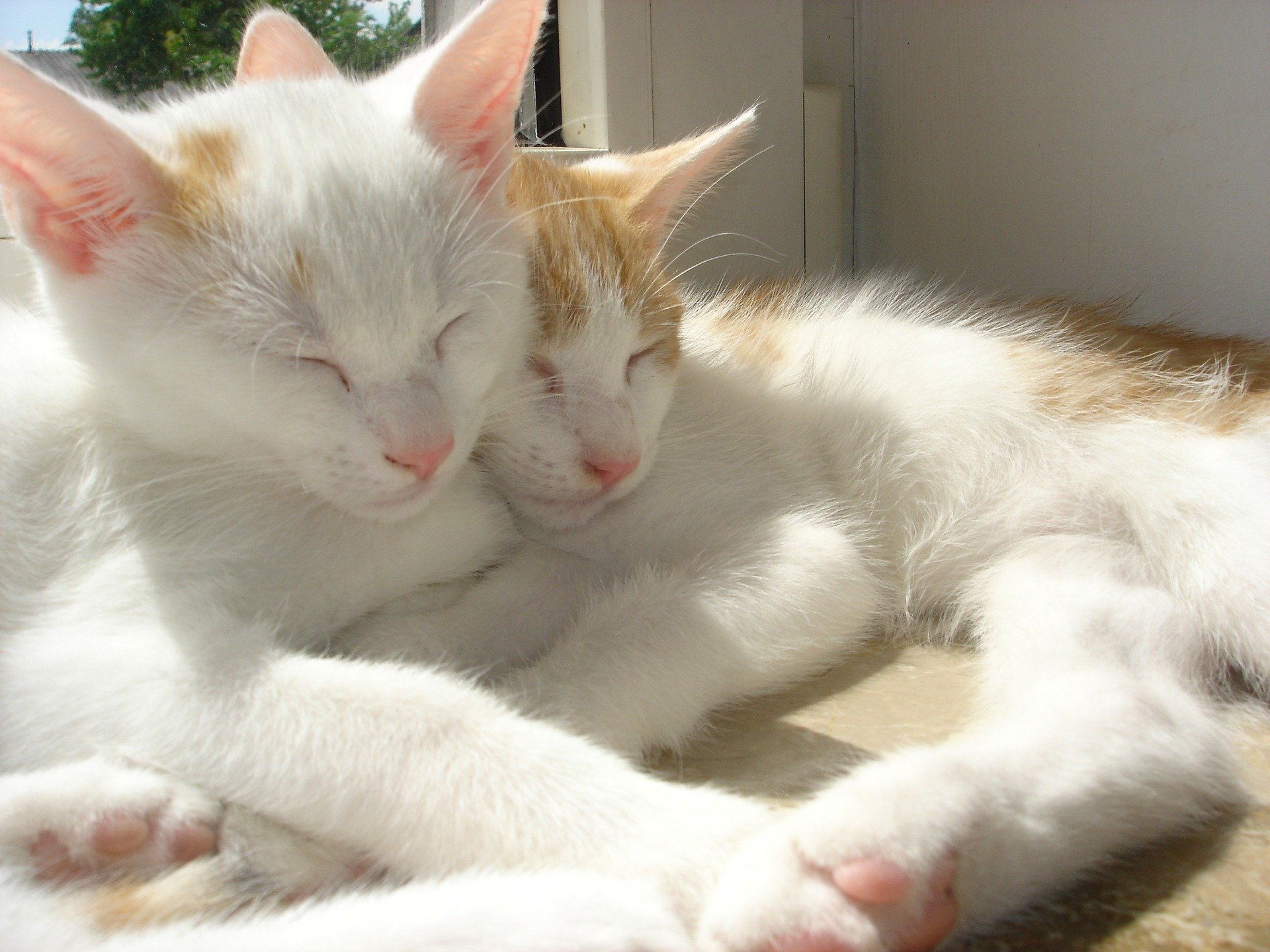 Kitties. Click to see more of Adorable Animal Pictures for Valentine's Day | Animals Zone