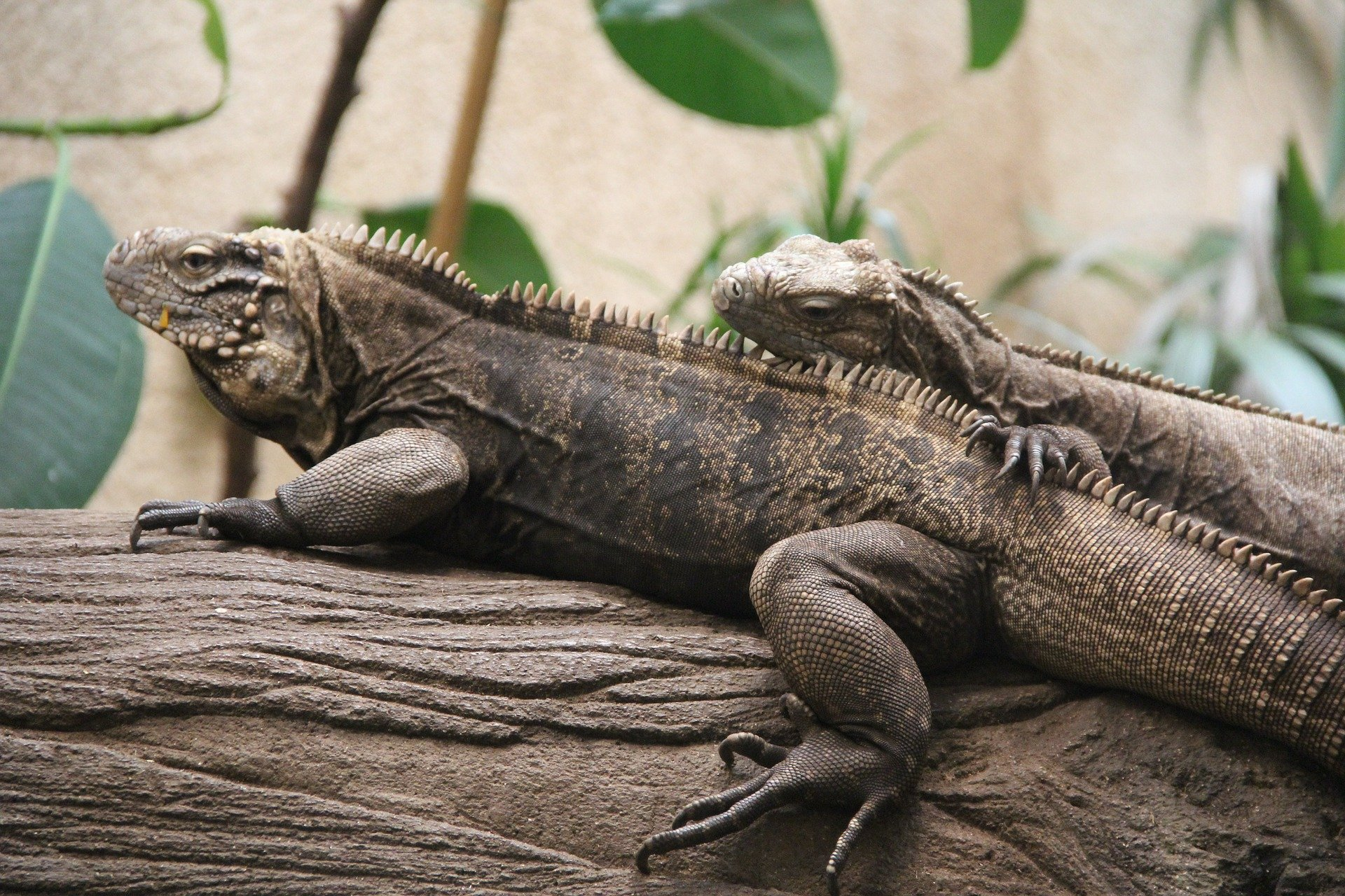 Reptiles. Click to see more of Adorable Animal Pictures for Valentine's Day | Animals Zone