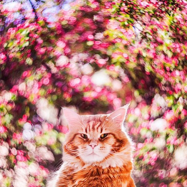 Beautiful Cat! Amazing Colors! | Animals Zone