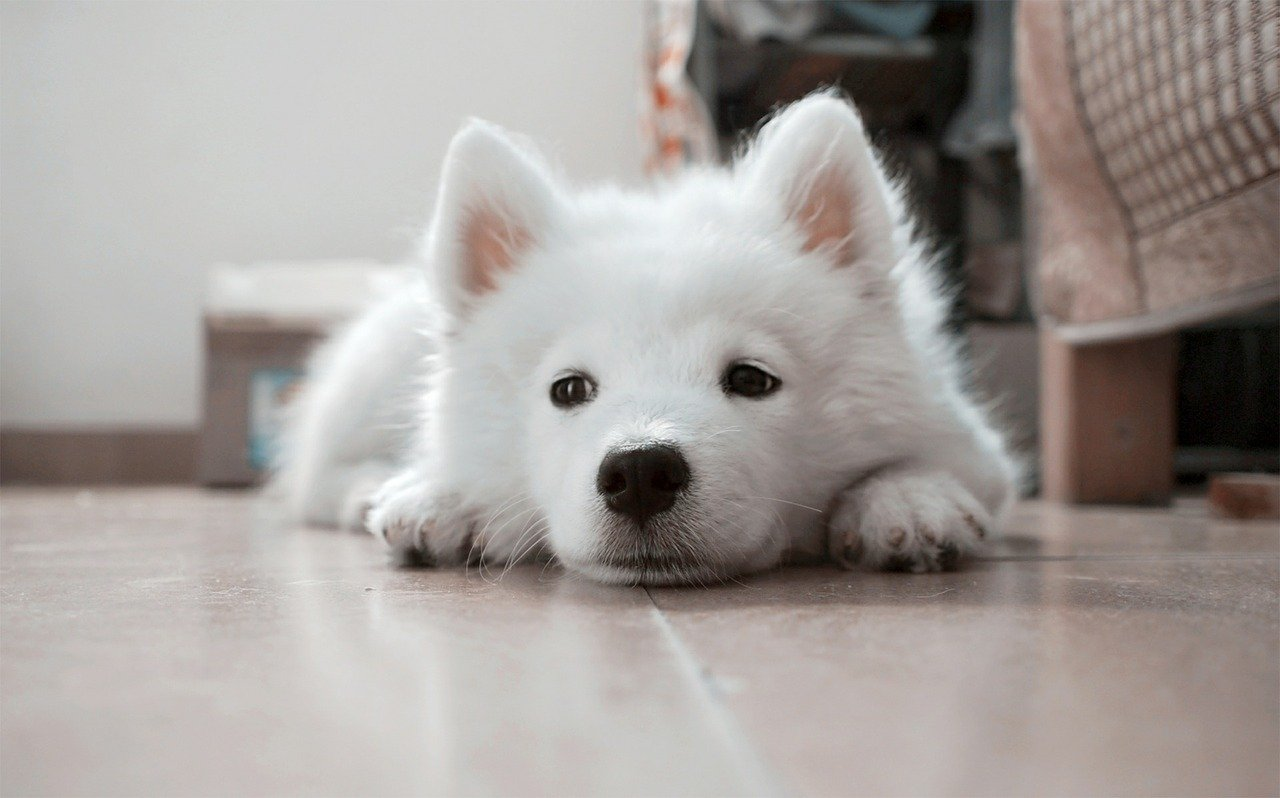 White Puppy. Happy National Puppy Day! Click for more adorable photos! | Animals Zone