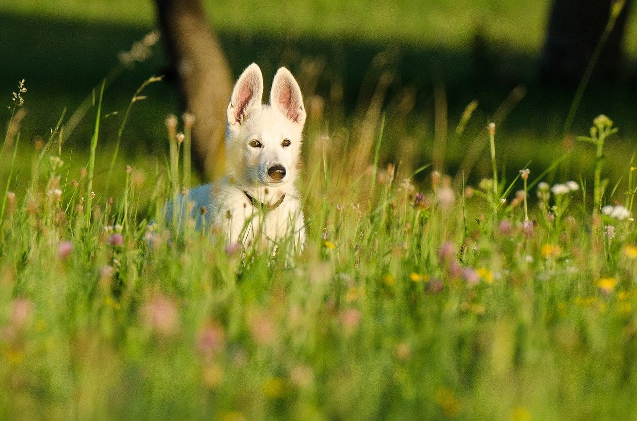 Adorable schäfer dog. Happy National Puppy Day! Click for more adorable photos!   Animals Zone
