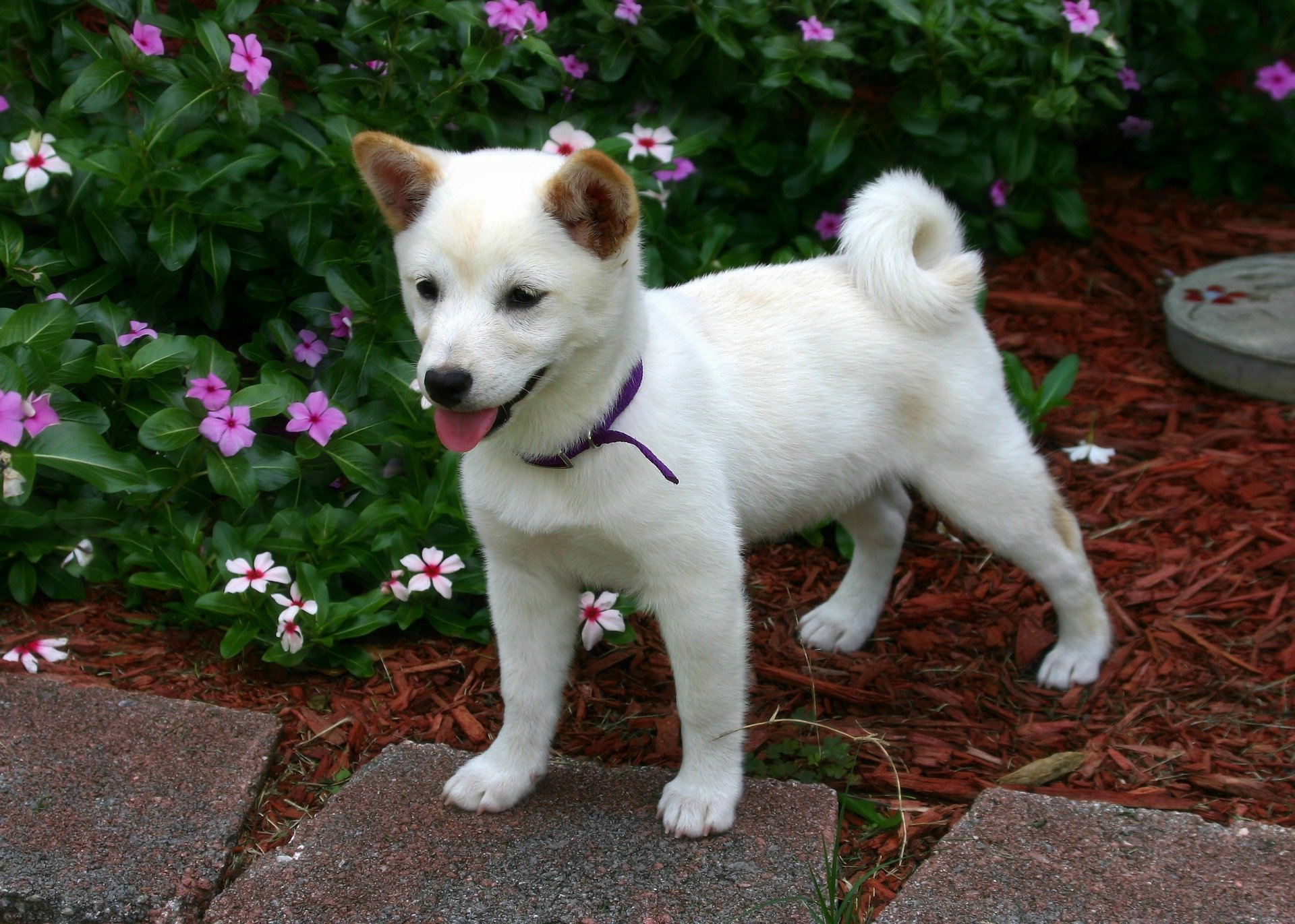 Shiba Inu. Happy National Puppy Day! Click for more adorable photos! | Animals Zone