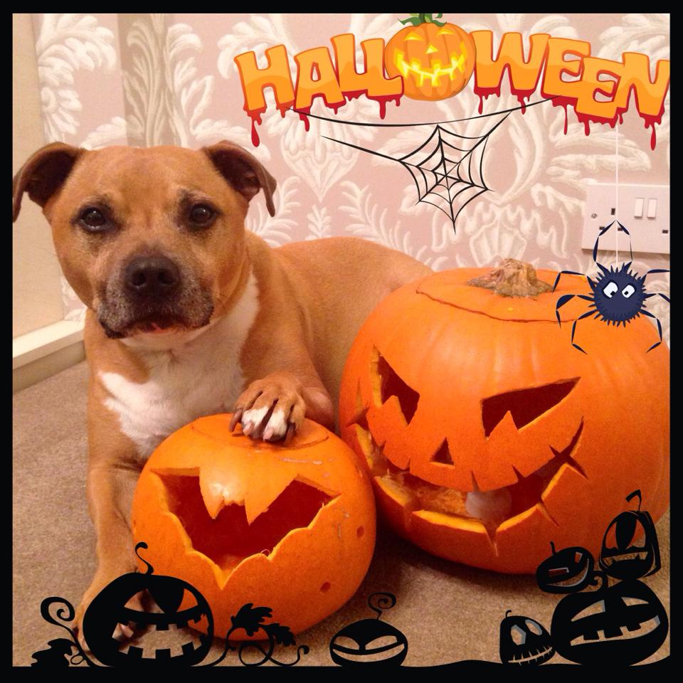 This is Bruce with his pumpkins :-)