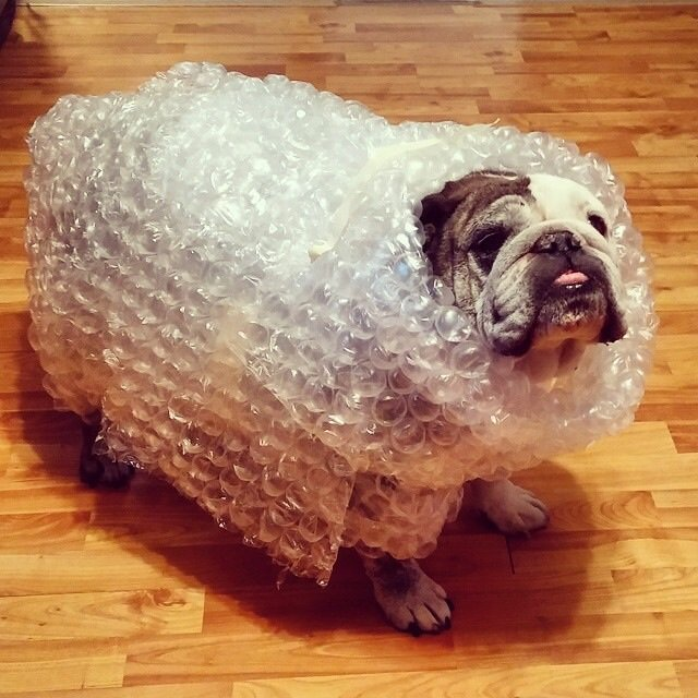 Bubble Wrapped Bully, MissyG