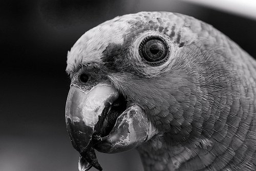 Black And White Pictures Of Animals
