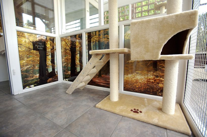 Unusual Luxury Cat Hotel Animals Zone