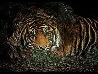 Wonderful World of Big Cats | Animals Zone